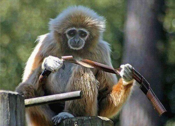 monkey and film