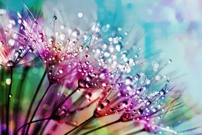 Purple silk flowers with dewdrops