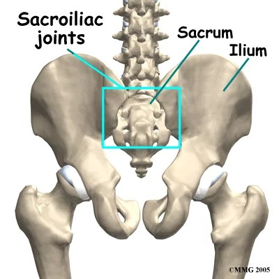 Mechanics Of Pelvic Girdle Stability And Self Bracing In Sij Related