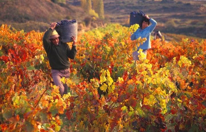 vinograd-ispaniya