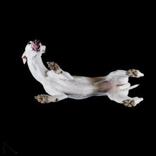13-Under-dogs-58ec83ce32340__880