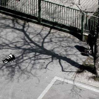 nature-street-art-43-58edec701f269__700