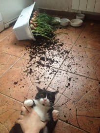 share-the-mess-your-pets-made-when-you-left-them-alone-105-58ec7587d2e75__700