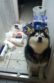 share-the-mess-your-pets-made-when-you-left-them-alone-106-58ec84942c98b__700
