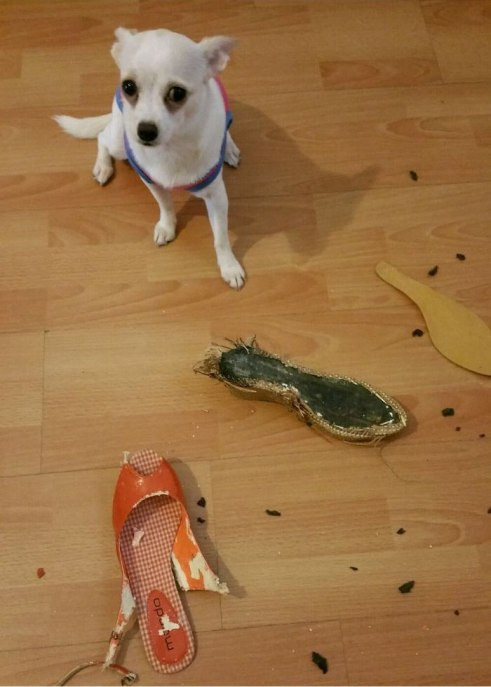 share-the-mess-your-pets-made-when-you-left-them-alone-137-58ef1dbc35017__700