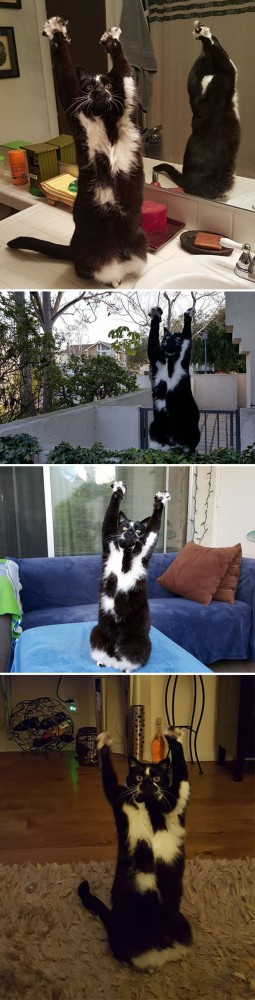 hey-pandas-share-pics-of-your-cat-acting-weird-139-5935428c8d757__700