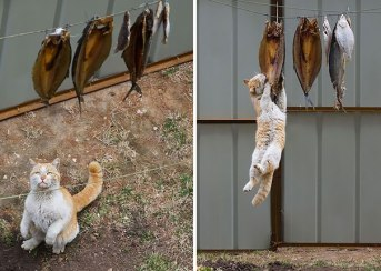 pets-caught-red-handed-stealing-animals-10-594d1d6e3d764__605