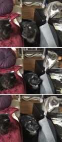 cats-dogs-not-getting-along-hate-living-together-3-59b1112825349__605