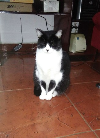 cats-with-unusual-fur-markings-50-59b8d6c652b28__605