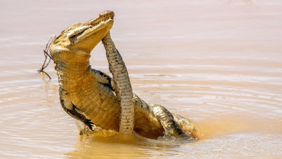 этом картинки крокодилов и змей когда гроб открыли