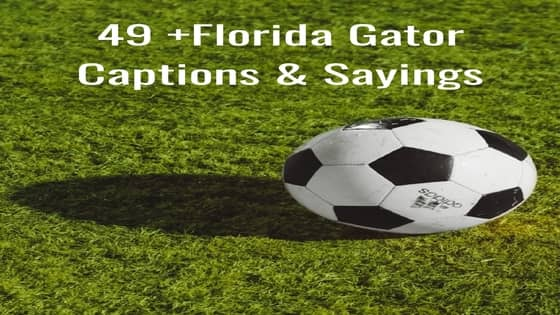 Florida Gator Instagram Captions
