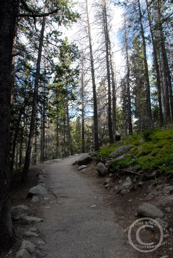 Bear Lake Trail