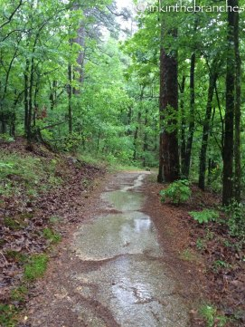 Soggy trails