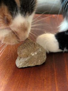 Sylvie thinks fossils smell good!