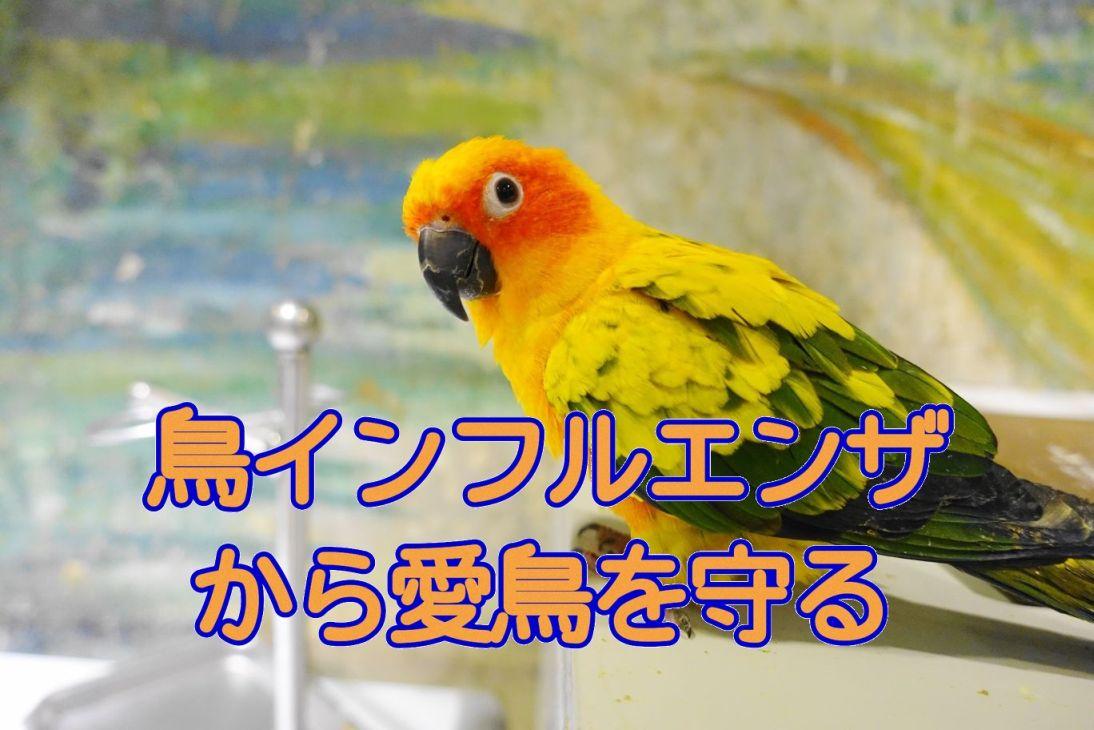 鳥インフルエンザから愛鳥を守る