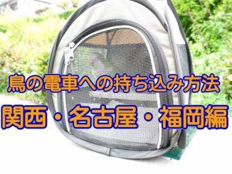 鳥の電車・鉄道への持ち込み方法(関西・名古屋・福岡編)