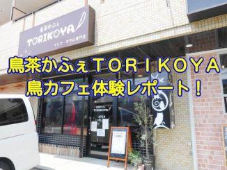 鳥茶かふぇTORIKOYAの体験レポート記事のアイキャッチ3