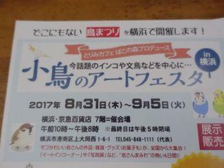 小鳥のアートフェスタin横浜のお知らせアイキャッチその2