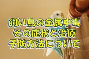 飼い鳥の金属中毒の症状と治療、予防方法について