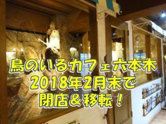 鳥カフェ「鳥のいるカフェ六本木店」が閉店し、東京台東区・根津駅付近に移転