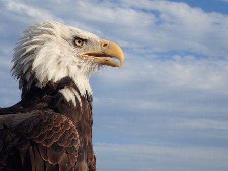 サッカーワールドカップのユニホームで最も登場した鳥のデザインは鷲(ワシ)または鷹(タカ)