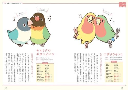 BIRDSOTRYのコザクラインコとボタンインコのイラスト