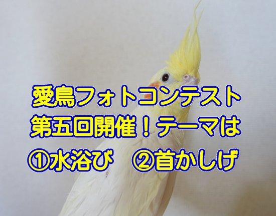 愛鳥フォトコンテスト第五回開催!テーマは水浴びと首かしげの2種類