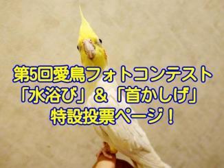 第5回愛鳥フォトコンテスト「水浴び」と「首かしげ」特設投票ページ