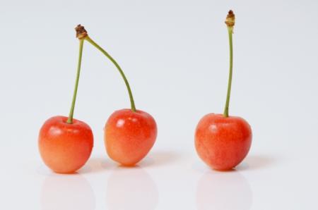 バラ科の果物にはさくらんぼも含まれている