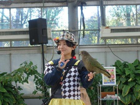 掛川花鳥園のバードショーに参加するミヤマオウム