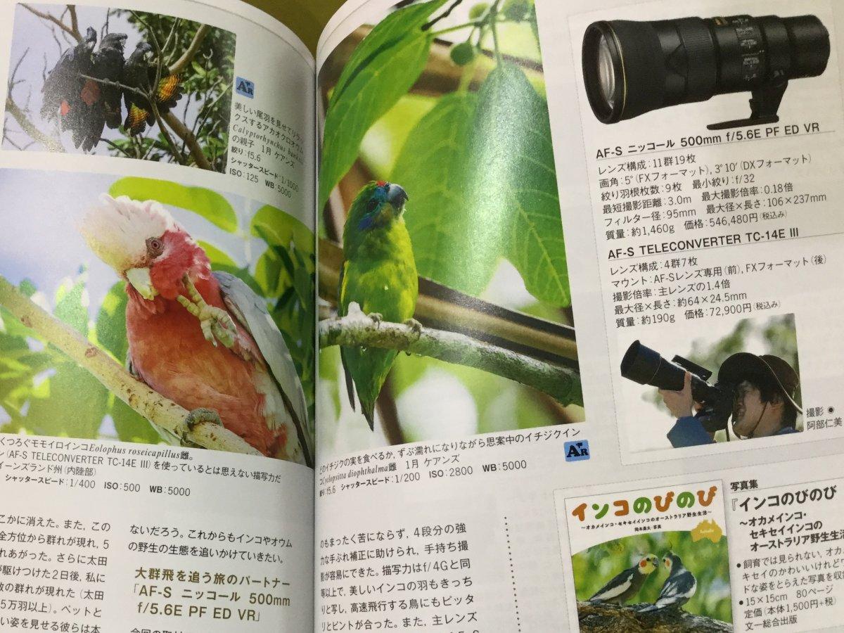 モモイロインコやアカオクロオウム、イチジクインコの岡本勇太さん撮影写真を紹介