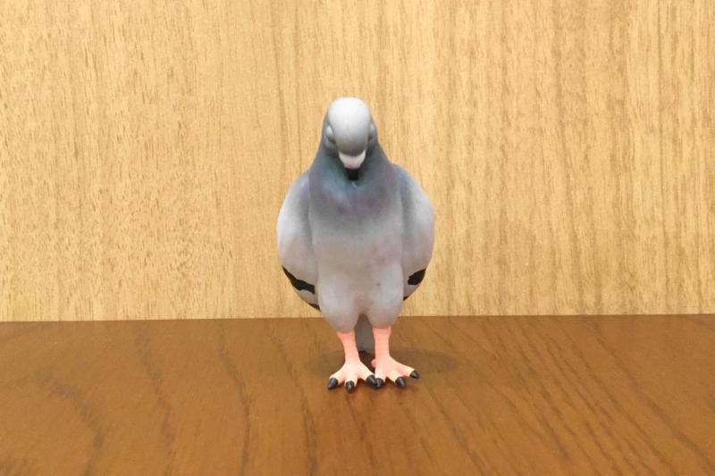 立っている状態のつかれたハトの正面顔(疲れ切ったハト)