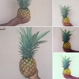 ...a transferable skill, hello Pineapple!