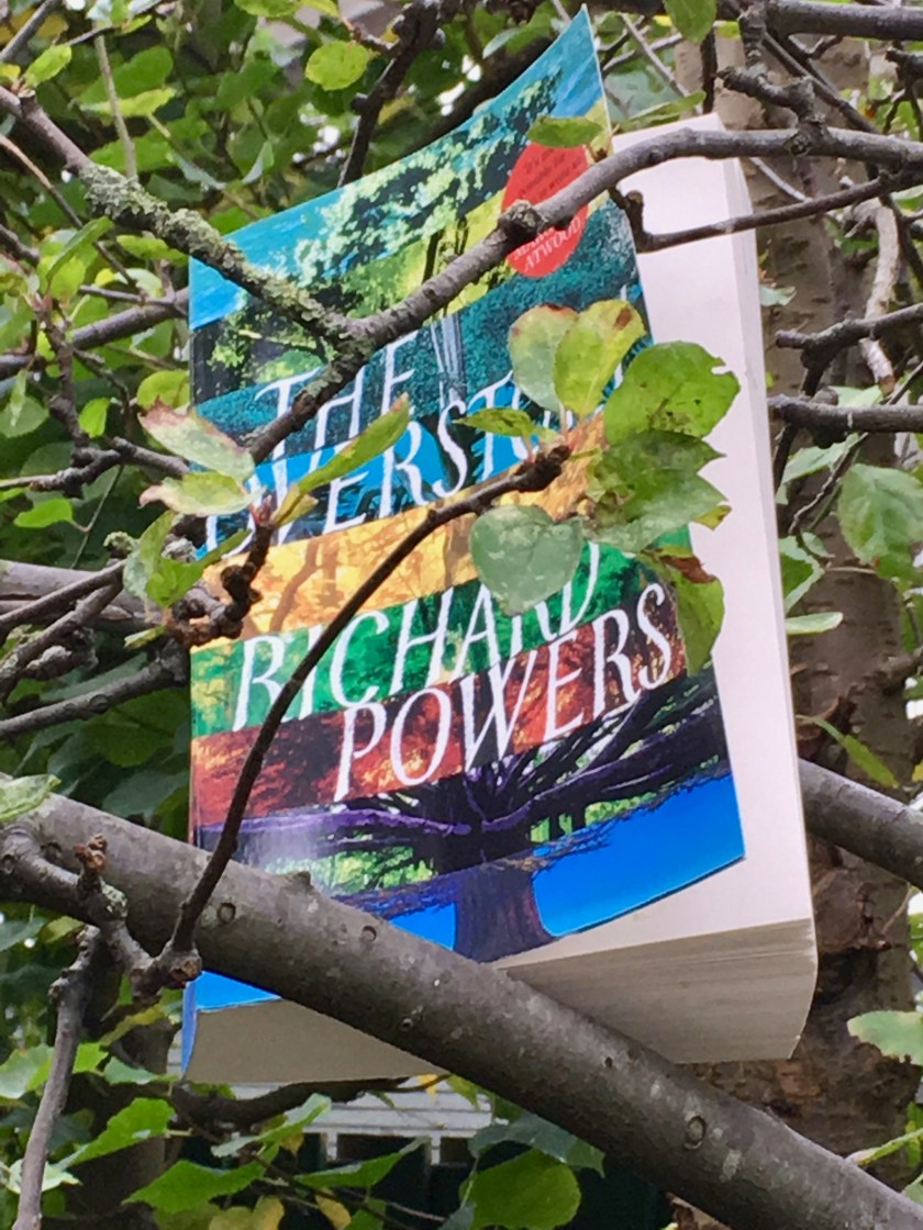 The Overstory by Richard Powers in a crabapple tree
