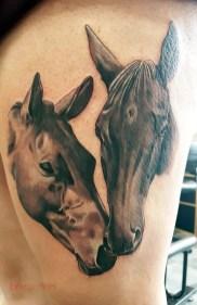 rachel horses