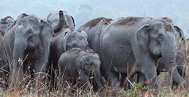 elephants10a