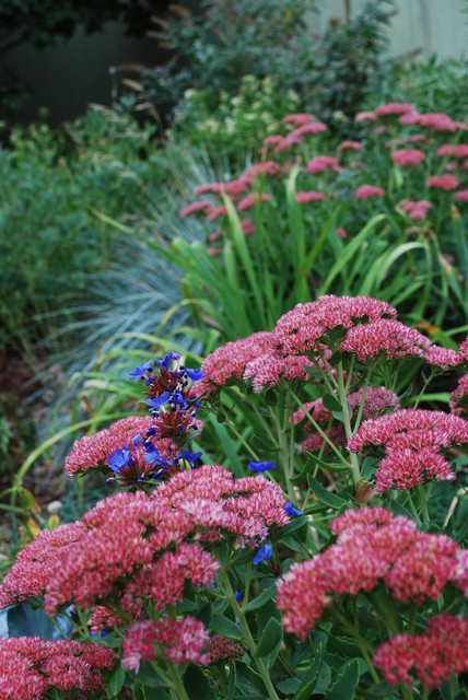 Fall Is Calling: What to Do in Your October Garden (10 photos)