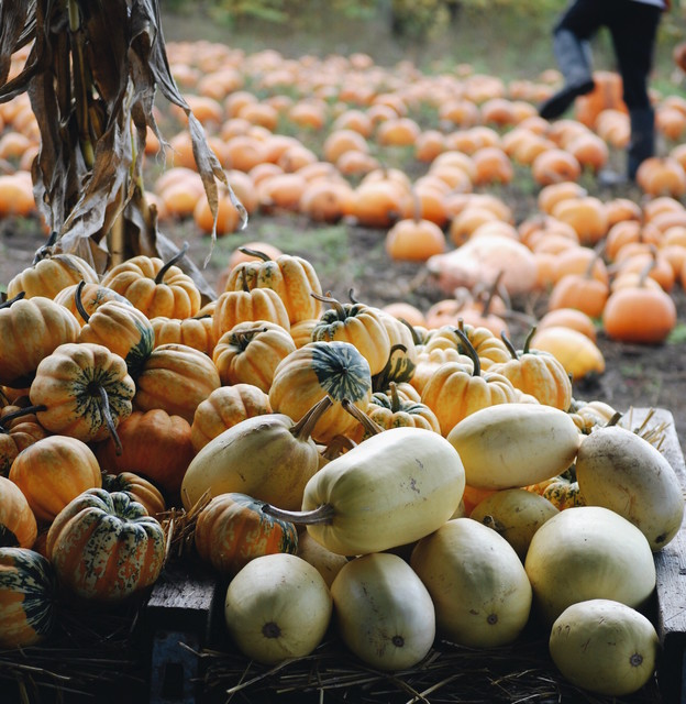 Get Pumpkins! And More Ways to Make the Most of This Weekend (7 photos)