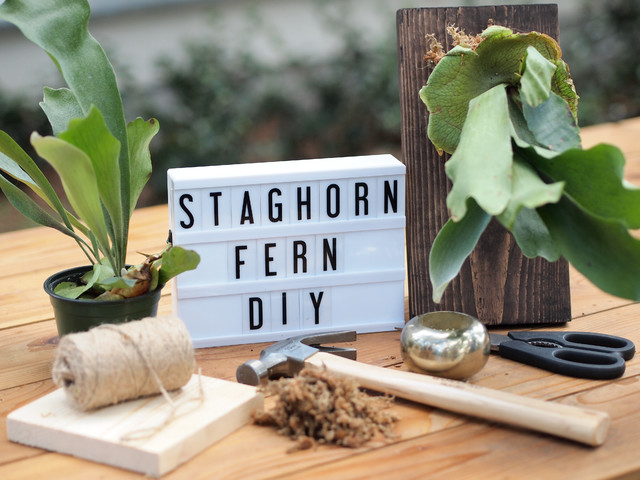 How to Put the New 'It' Air Plant on Display (31 photos)