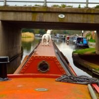An Ideal Narrowboat Boat Dog?