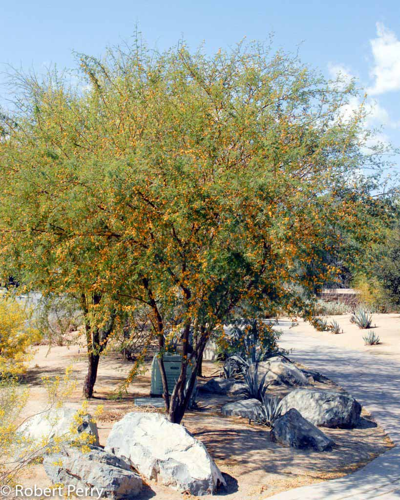 Drought Shrub California