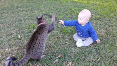 Everyone is constantly fighting, even the cats and babies (with feathers, no less!)