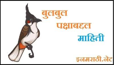 bulbul bird information in marathi