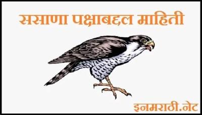 falcon-bird-information-in-marathi