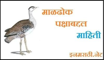 maldhok bird information in marathi