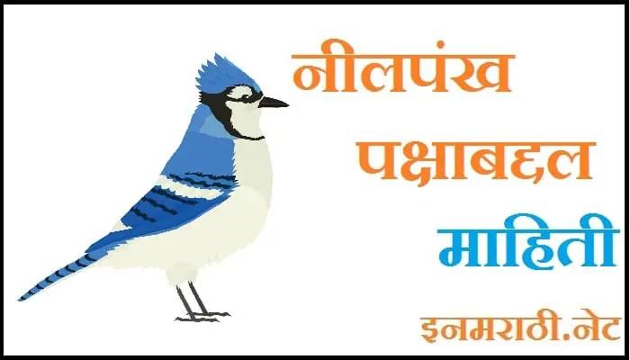 blue jay bird information in marathi