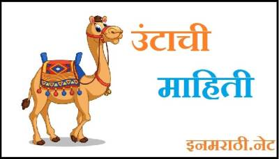 camel information in marathi
