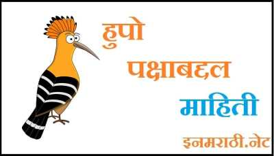 hoopoe bird information in marathi