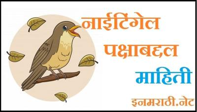 nightingale bird information in marathi