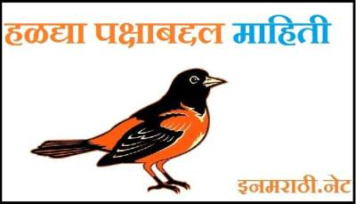 oriole bird information in marathi